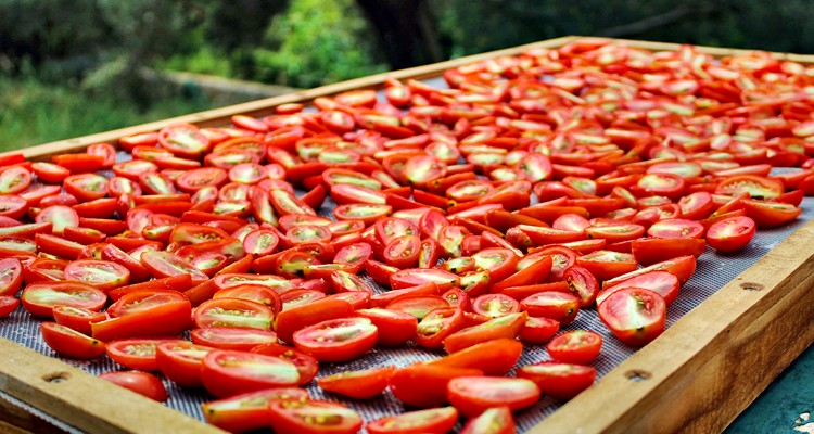 drying tomatoes outside in the sun