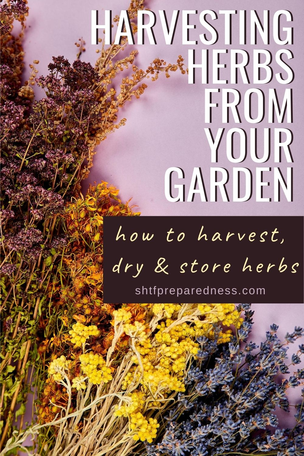 Harvesting herbs from your garden - Pinterest image