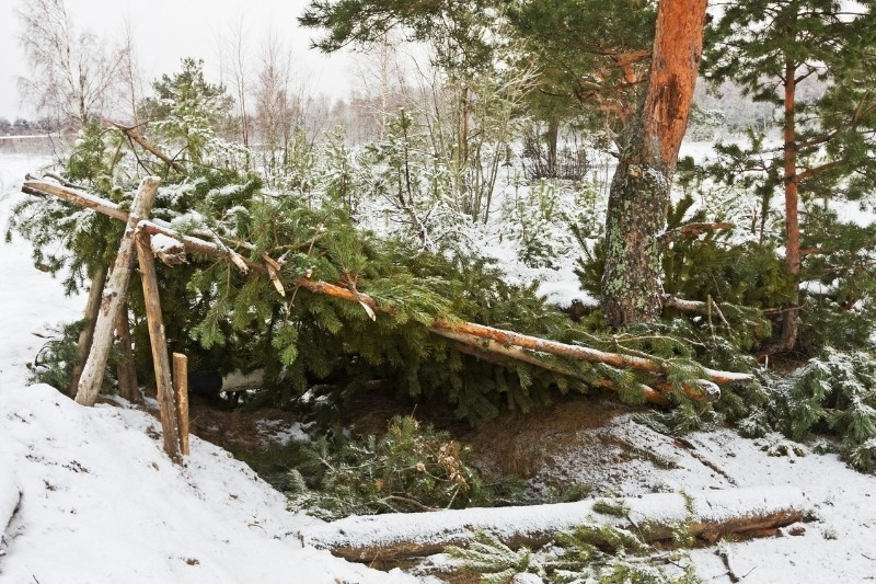 winter survival shelter made from pine boughs