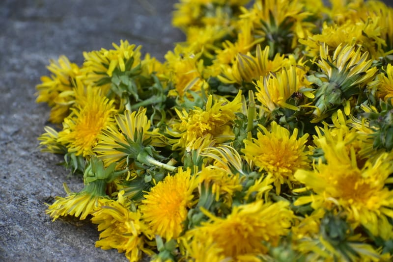 remove the dandelion heads from the stems